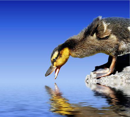 Hey, raus aus meinem Teich