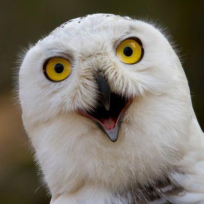 """Hey...hast DU gerade """"komischer Vogel"""" gesagt??"""