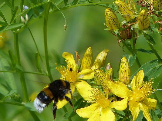 hhhhmmmm ... lecker Pollen