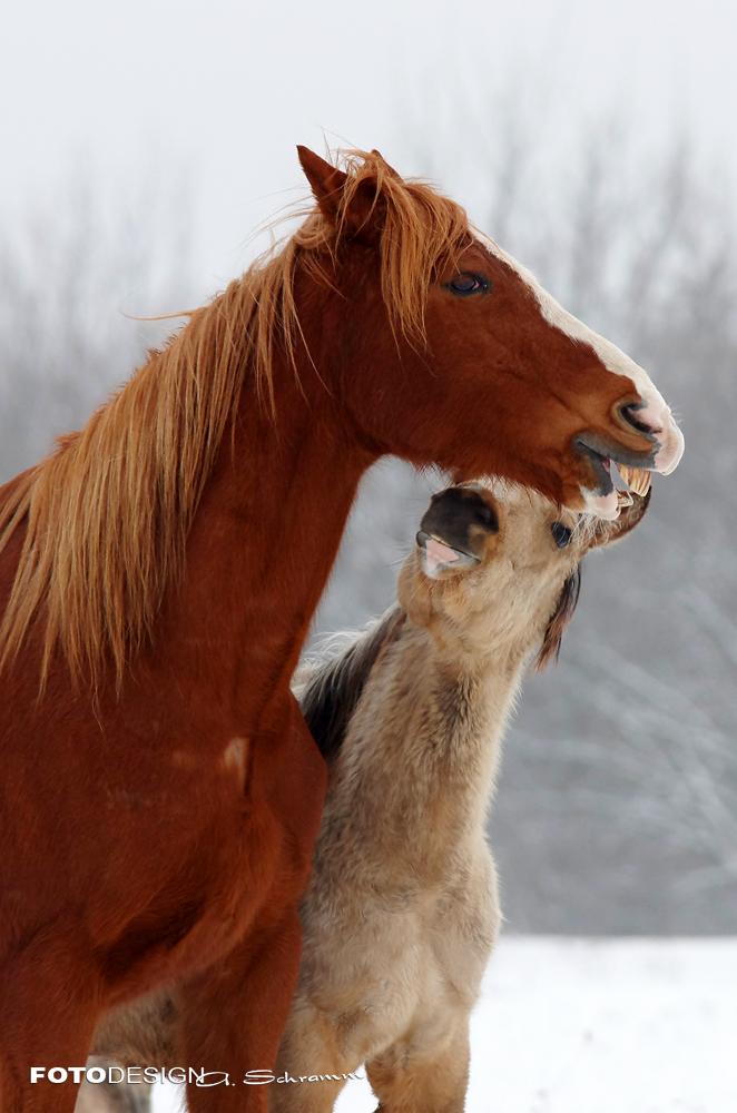 Hi, ich bin es, dein kleiner Freund...