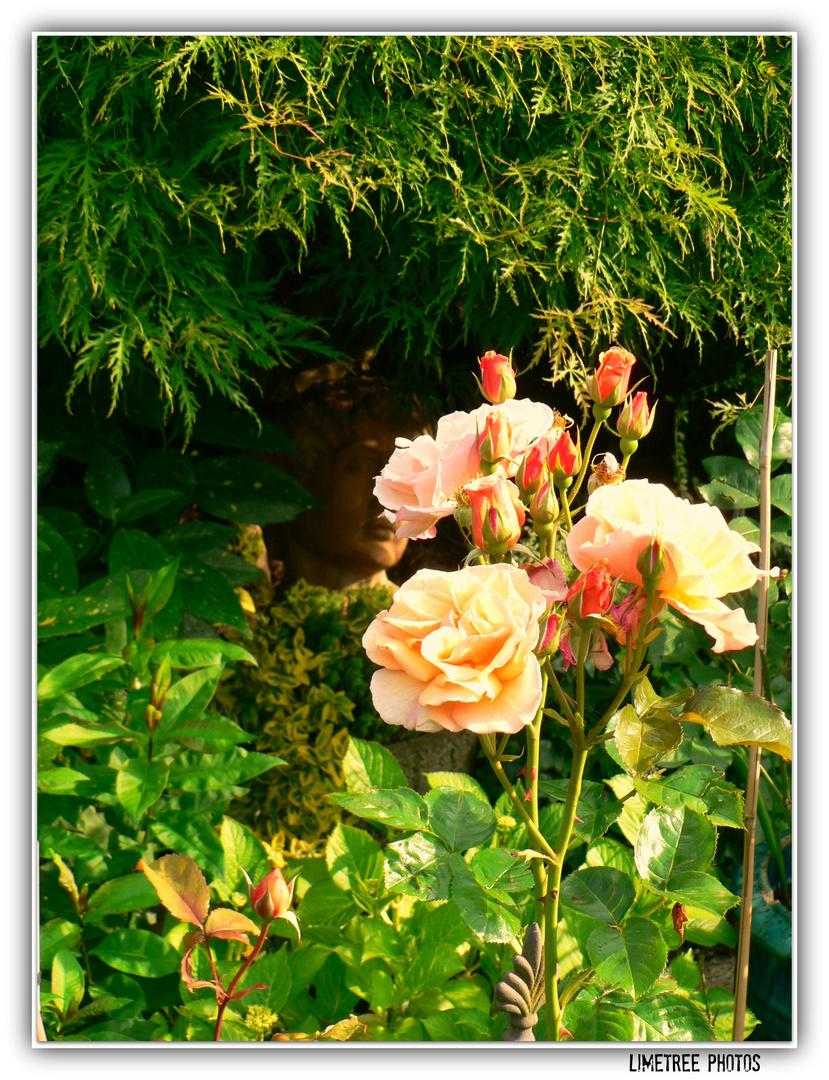 Hidden David in a Rose Bush