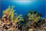 hidden reef