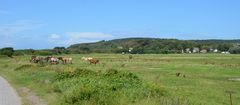 Hiddensee mit Pferde