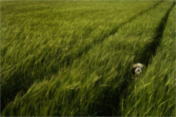 « hide and seek »