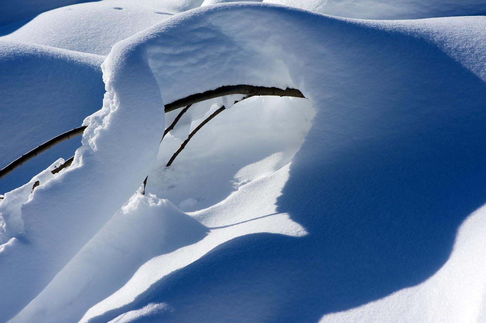 hiding beneath snow