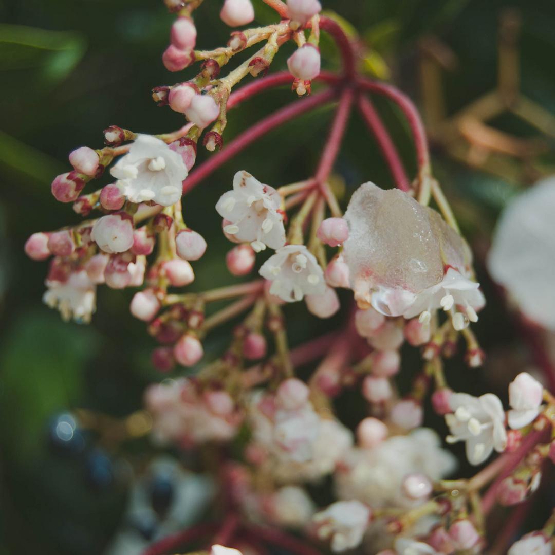 Hielo en flores