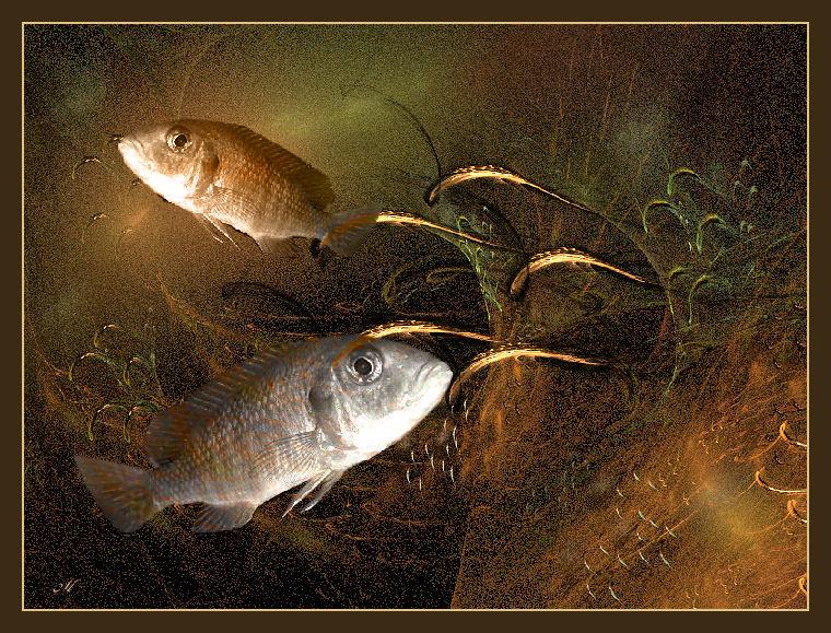 Hier bin ich Fisch,- hier darf ich`s sein,....