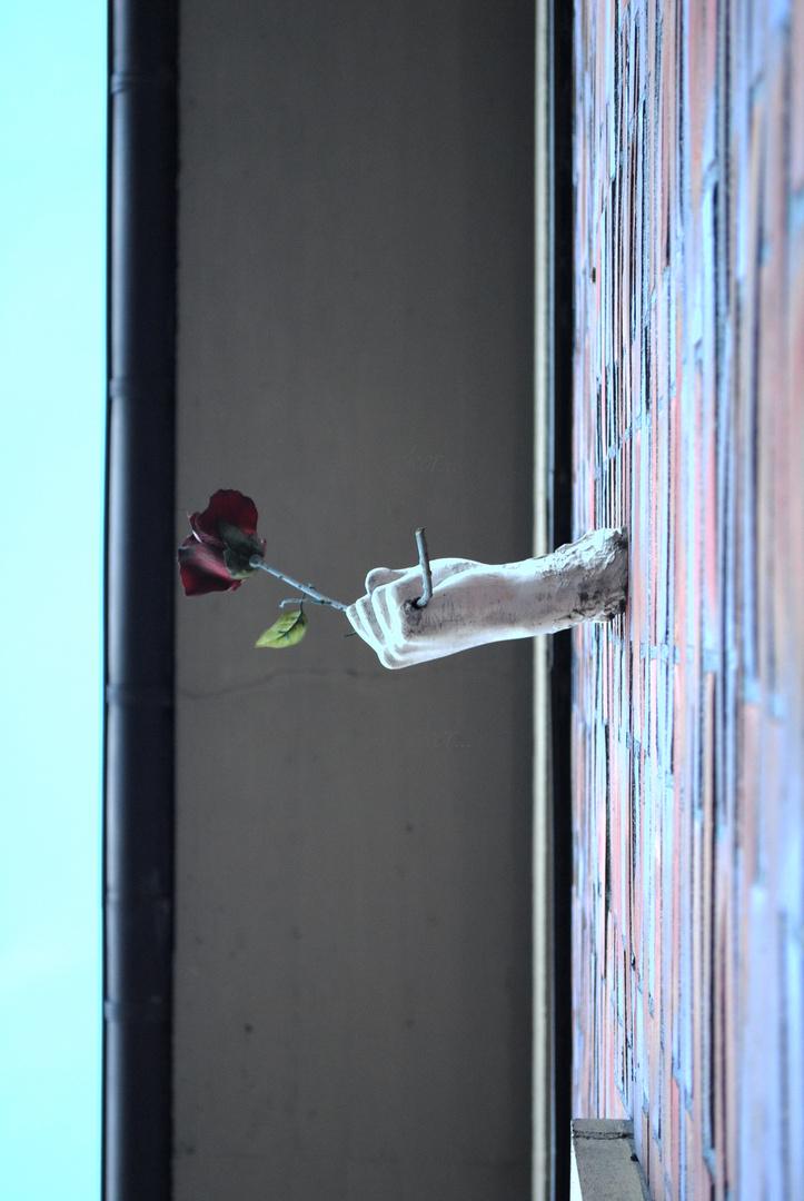 Hier eine Blume....!