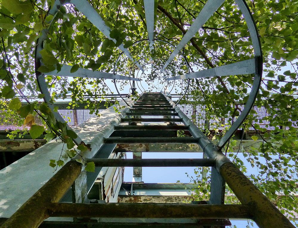 Hier geht es nach oben----in die Natur.
