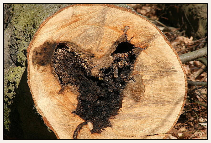 hier hat der Pilz schon ganze Arbeit geleistet :-(