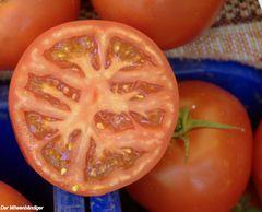 Hier sehen Tomaten wie Tomaten aus und sie schmecken auch wie Tomaten