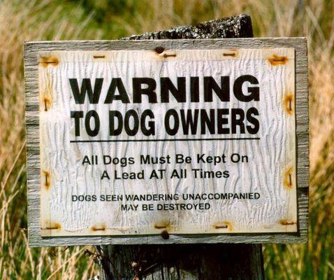 Hier sollte man auf seinen Hund gut aufpassen !