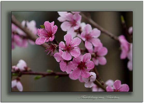 Hier und da und überall ist Frühling