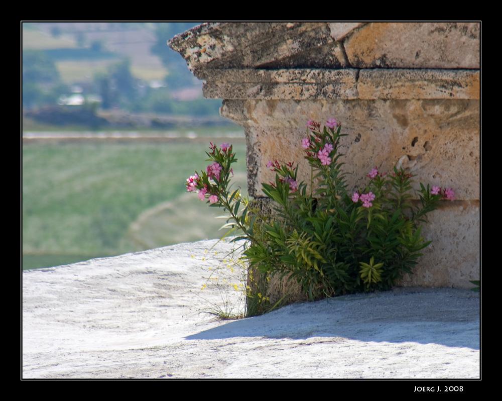 Hierapolis #3