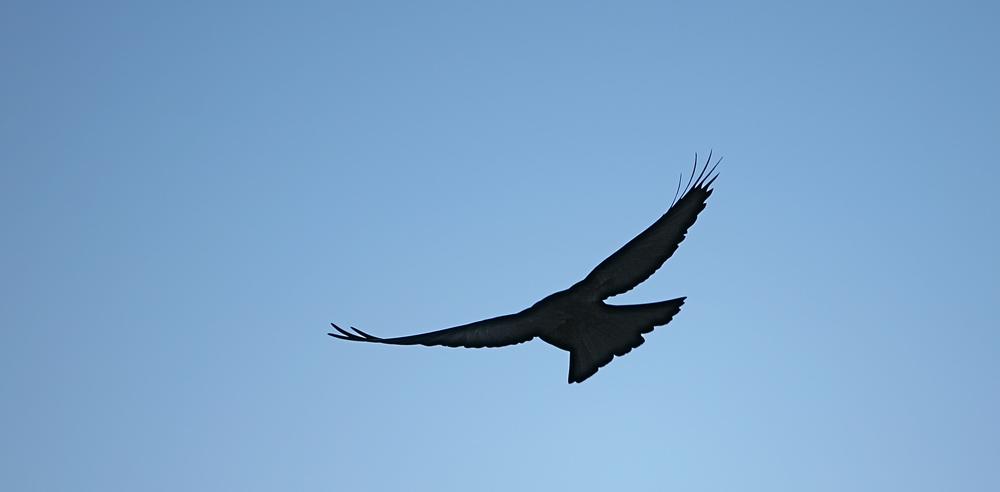 """""""high, high, like a bird in the sky""""...."""
