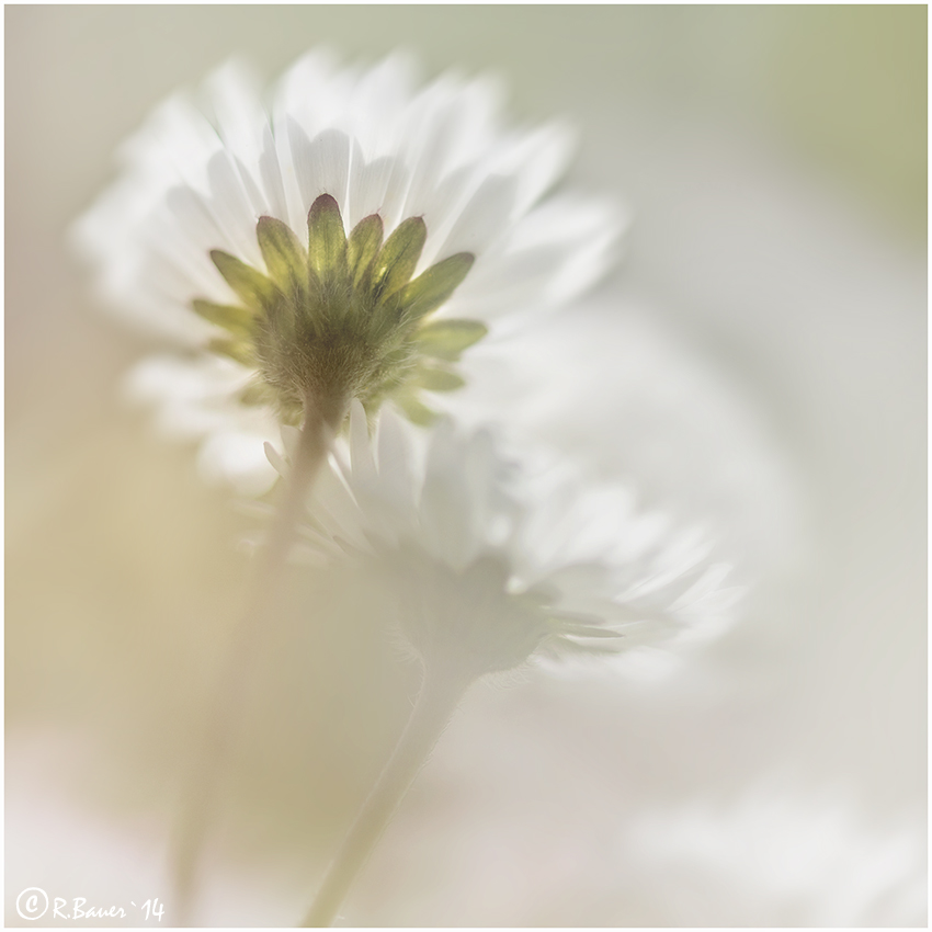 high key-flowers