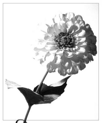 HighKey Blume