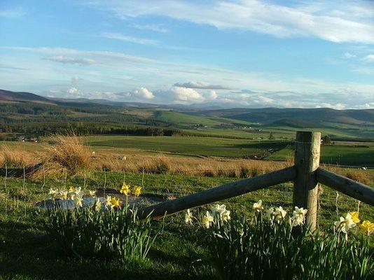 Highland near Dufftown