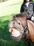 hihi my horse