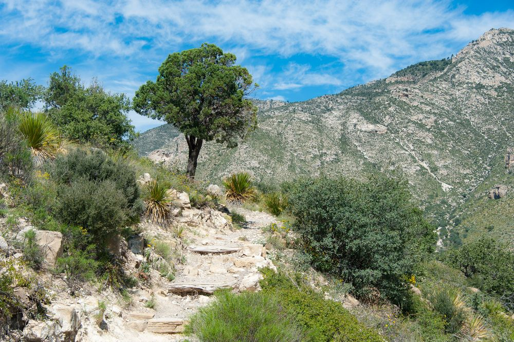 Hiking Guadalupe Mountains