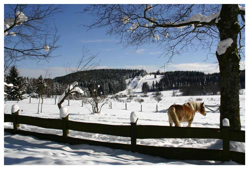 Hilchenbach -Giller im Schnee- Februar 2005