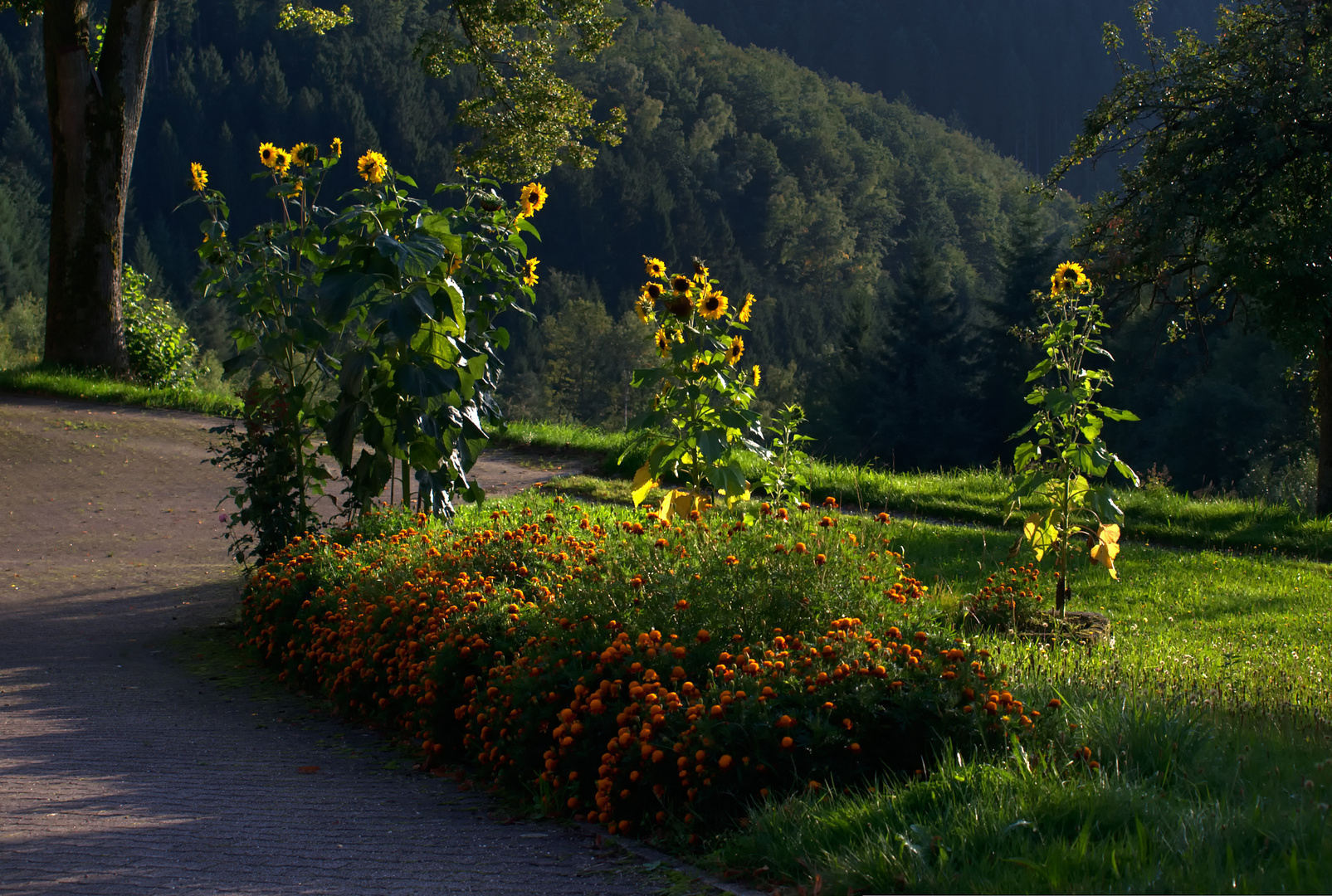 Hildegard's Sonnenblumen RELOAD