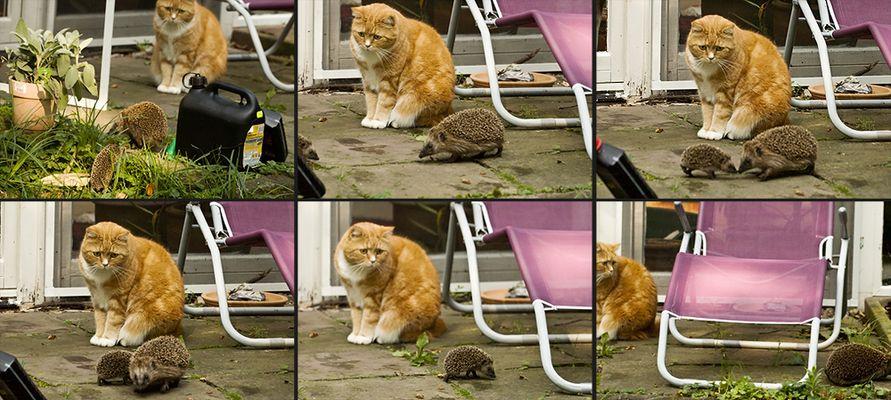 Hilfe! Aliens auf meiner Terrasse!