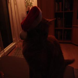 Hilfe!Der Nikolaus braucht Euch...
