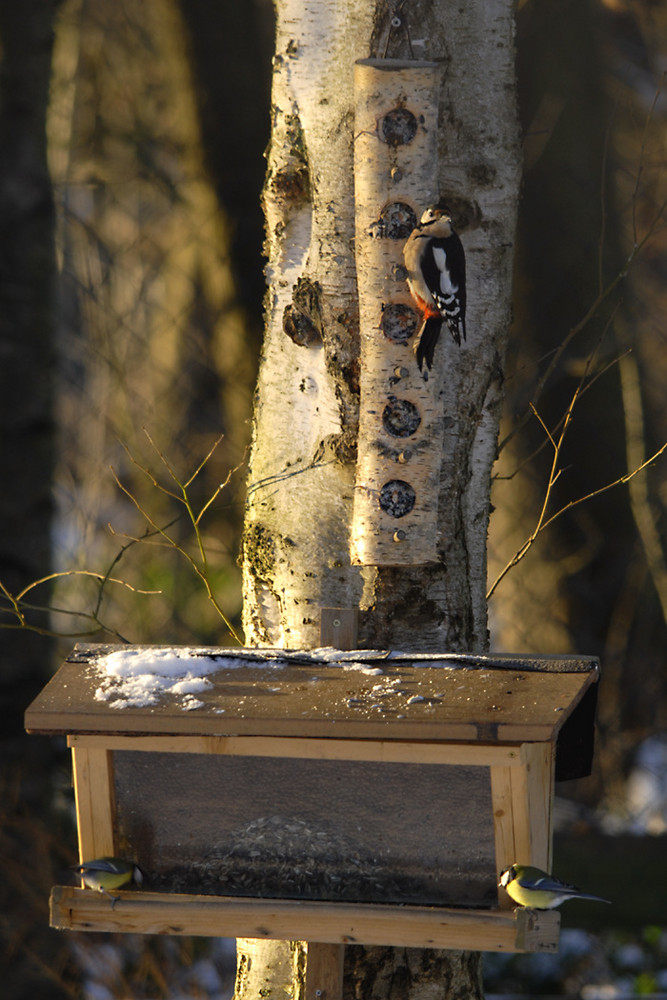 Hilfen zur Vogelfütterung