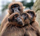 ...hilft bei dieser Affenkälte...