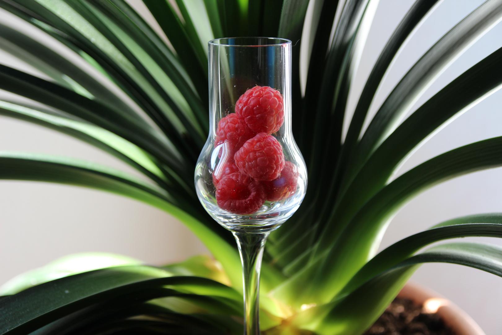 Himbeeren im Glas