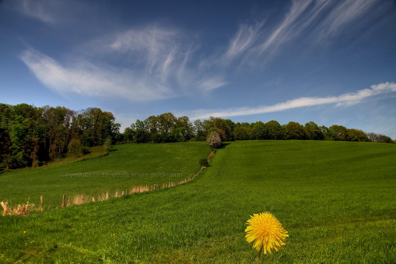 Himmel Feld und Blume....