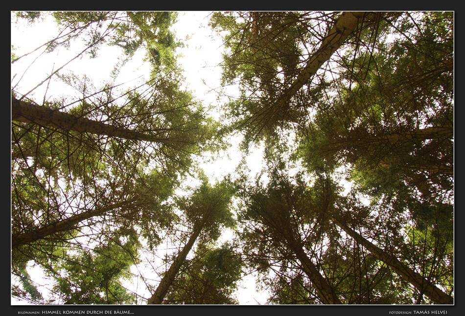Himmel kommen durch die Bäume...