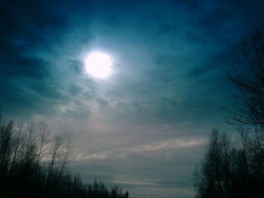 himmel, sonne, bäume