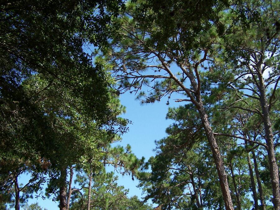 Himmel über Park FL