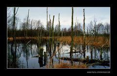 Himmelmoor Dezember 2011