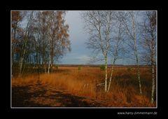 Himmelmoor im November