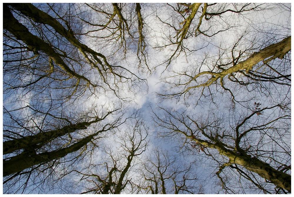 Himmelwärts ....im Novemberlicht......