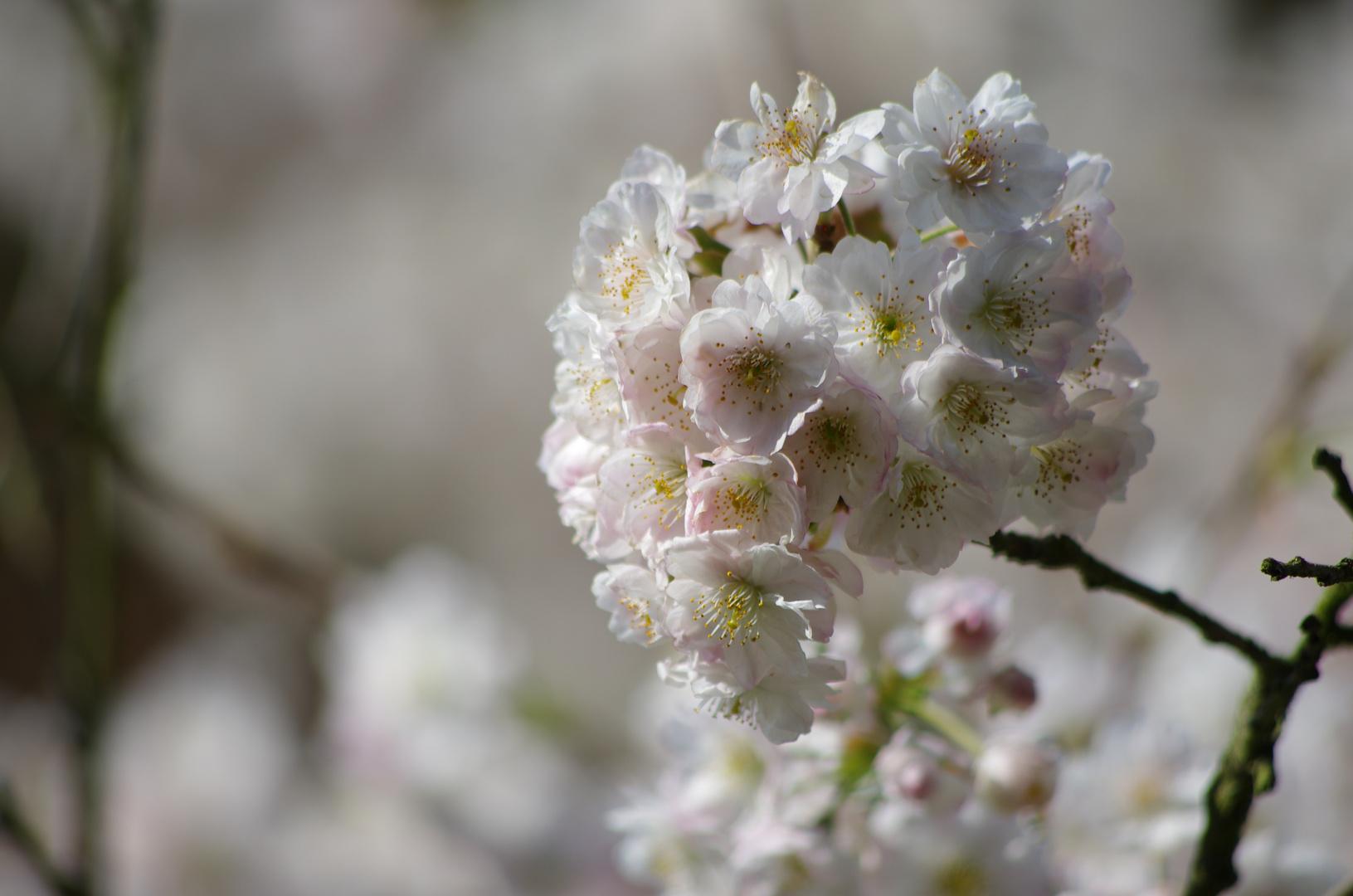 Himmlische Blüten
