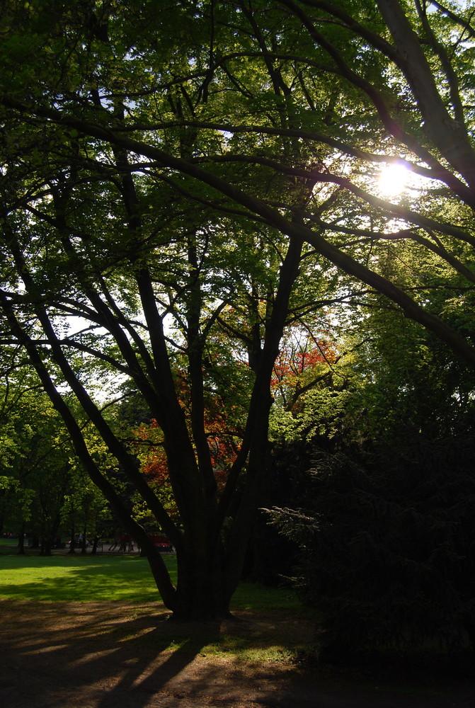 Himmlischer Wald