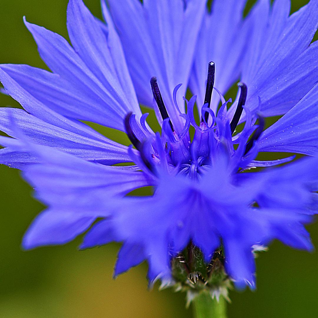 Himmlisches Blau