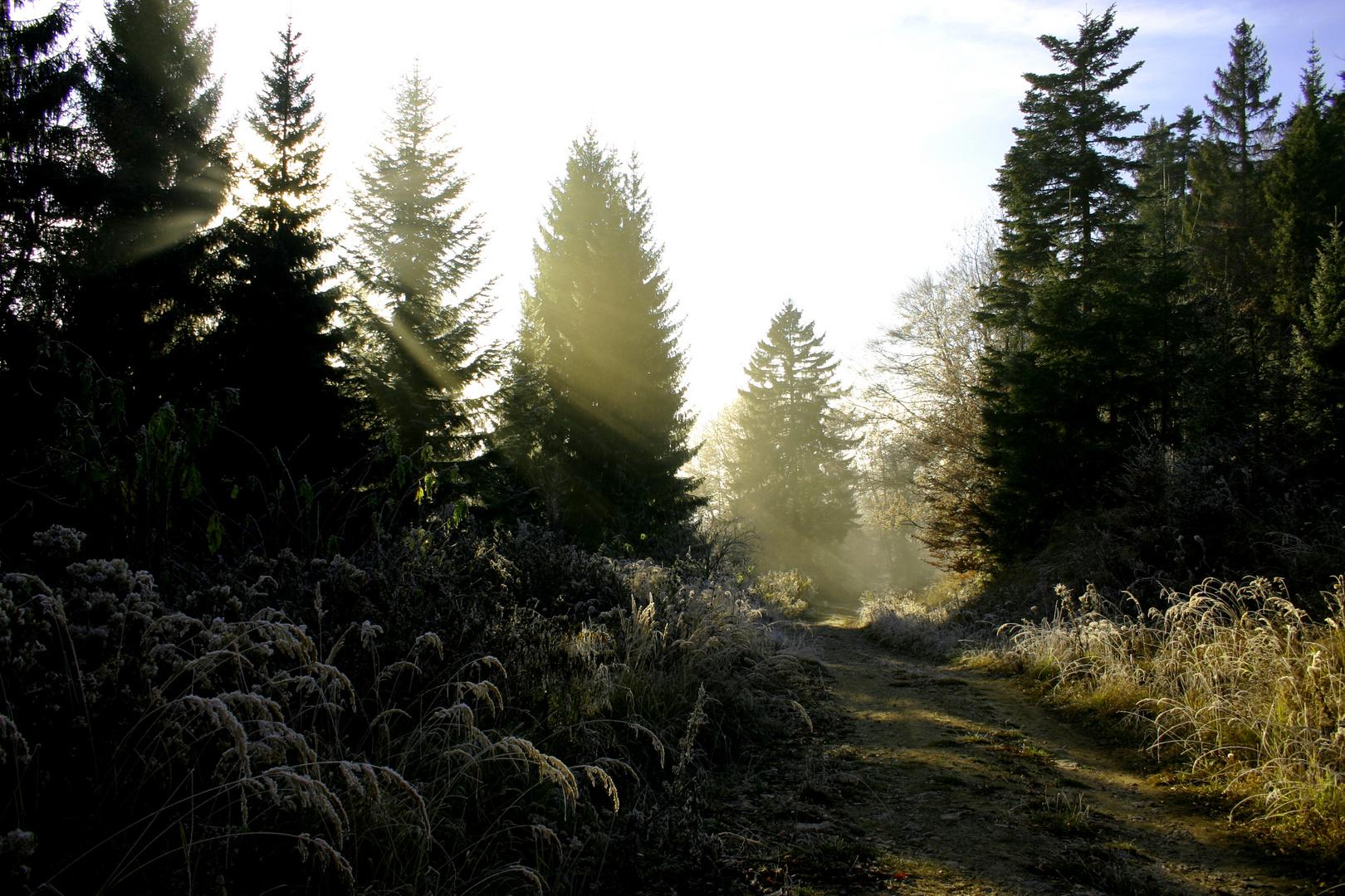 Hinab in den Nebel