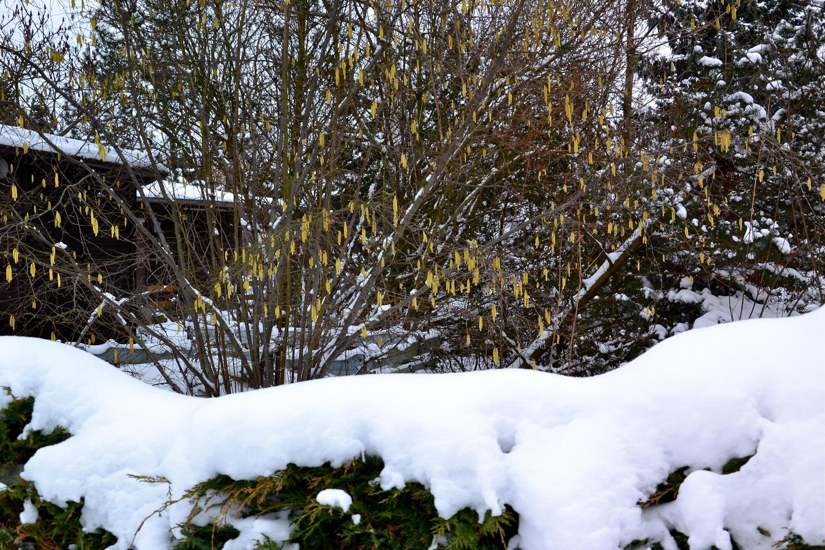 Hinten Frühling, vorne Winter…
