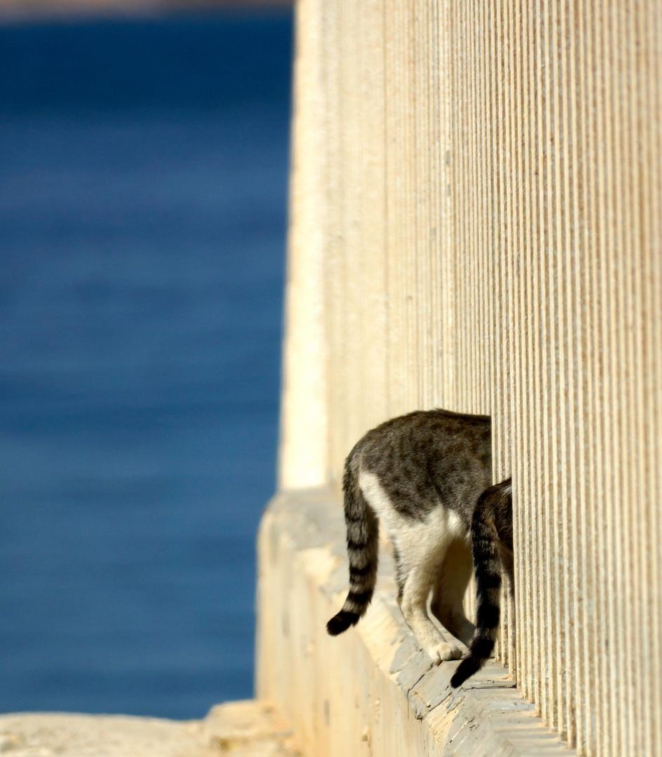 Hinter an Sicht ...Katzen in Spanien am Hafen von Torrevieja