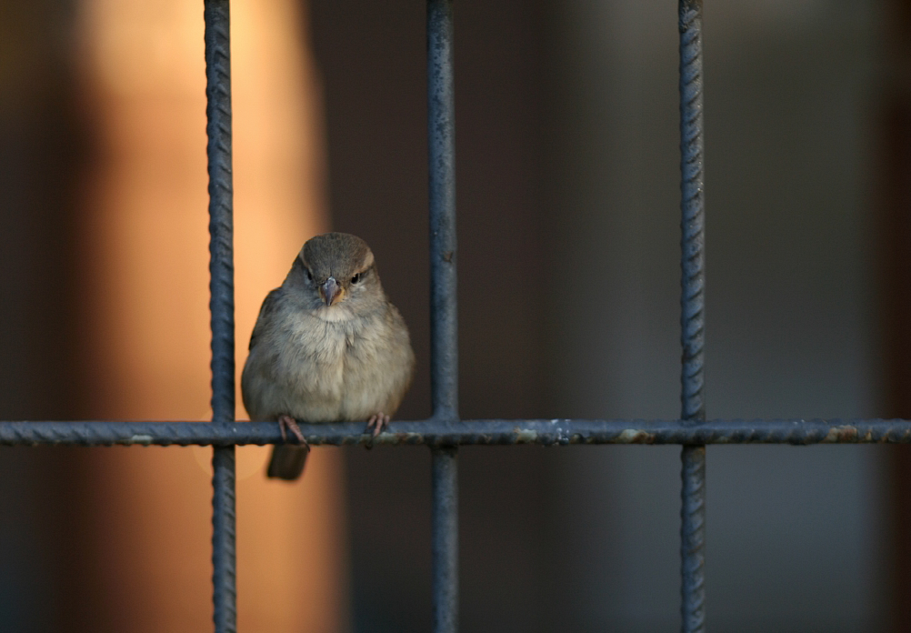 Hinter dem Gitter ist vor dem Gitter