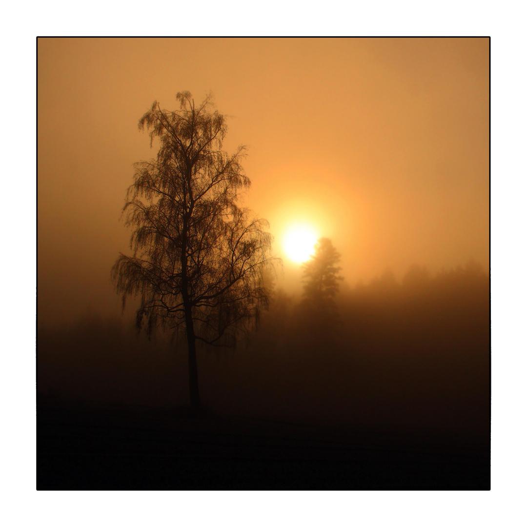 Hinter dem Nebel....