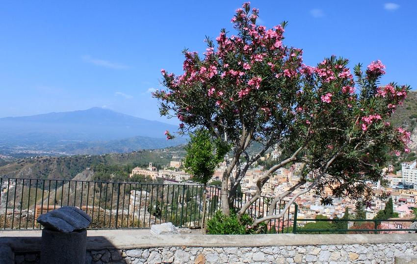 hinter dem Oleanderbusch