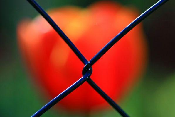 Hinter dem Zaun