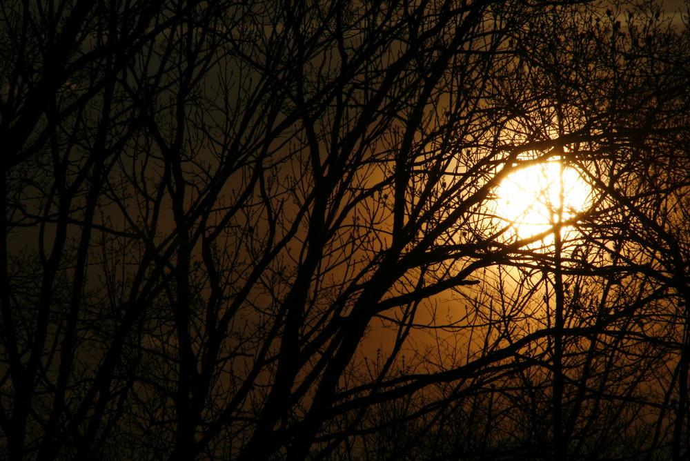 hinter den Bäumen