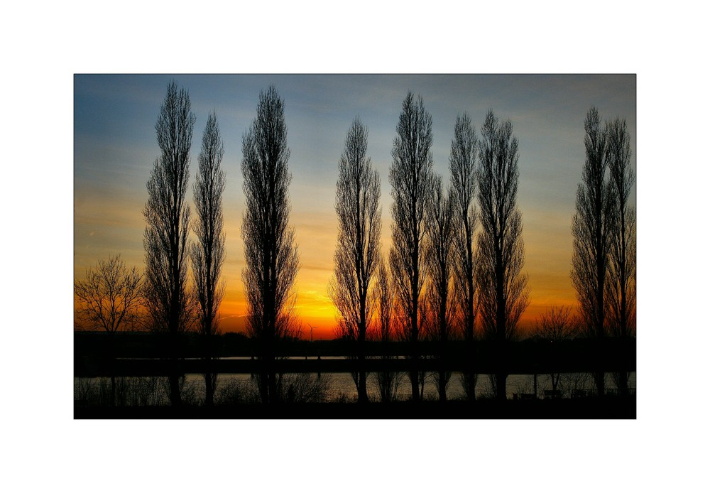 ...hinter den Bäumen